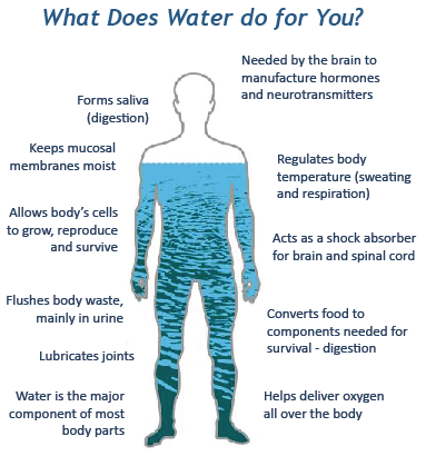 What does water do for you and your body