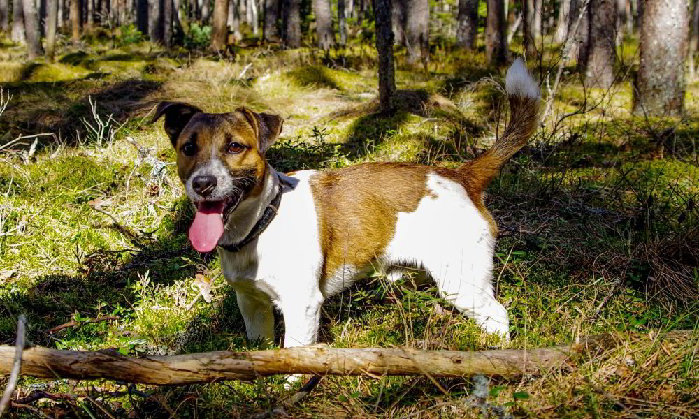 Woof Wag Wycombe | Dog Walking Service in High Wycombe