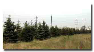 Recycling Land buffer Frank Road Recycling | Columbus, Ohio| Grove City, Ohio