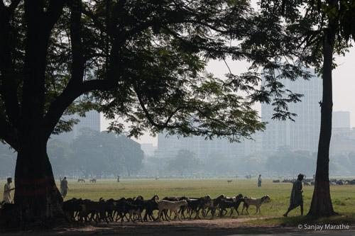Title - 'Maidan Landscape', Kolkata. Fine art photography print of Kolkata Cityscapes series by artist Sanjay Marathe