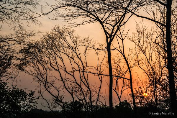 Title - Dusk Treescape 2. Fine art photography print of Landscapes series by artist Sanjay Marathe