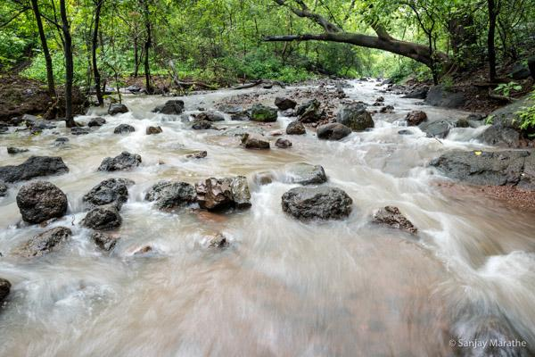 Title - 'Leopard Trail Stream' Monsoon Landscapes limited edition art photograph by Sanjay Marathe